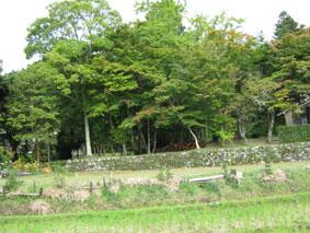 Nagatani