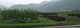 Shisobatake